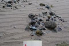 adventstauchen-2014-strande-5