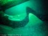 weispitzriffhaie-in-der-hohle