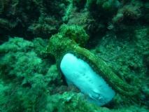 kraken-mit-beute-marmorzitterrochen
