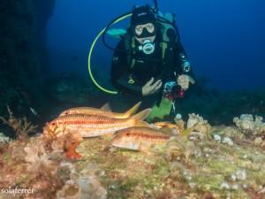Meerbarben und Guzzi
